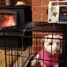 home dog emergency care
