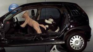 dog car crash