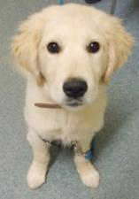puppy class student