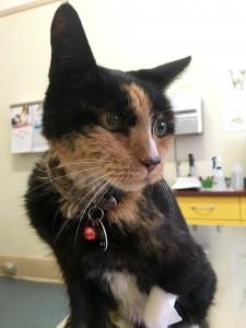 vet sick cat