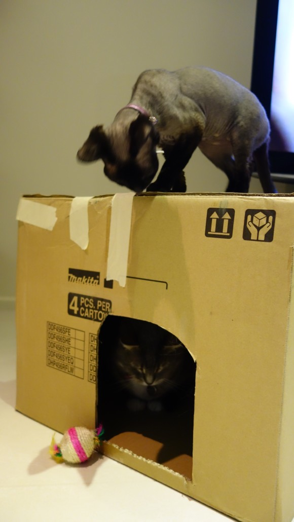 cat box play