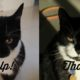 thyroid cat treatment