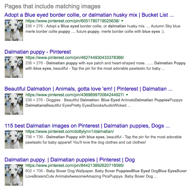 reverse image puppy
