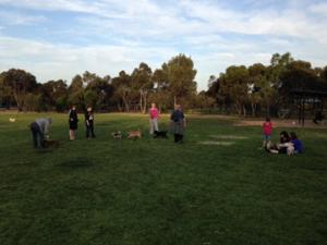 owners and their pets socialise in North Adelaide Dog Park