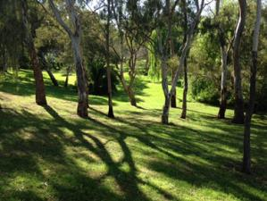 beautiful trails at Felixstow section of the River Torrens Linear Path
