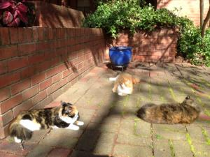 cats in courtyard