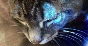 feline ringworm fluorescing