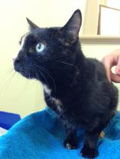 cat with lymphoma