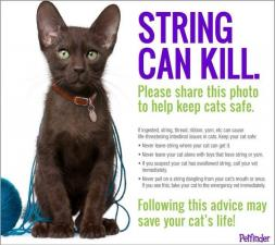 string cat danger