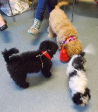 puppy play school