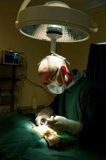 dog knee surgery
