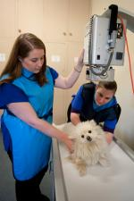 dog having xrays
