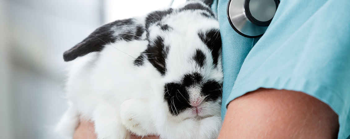 rabbit vet care