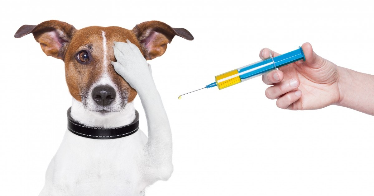 Common Vaccines For Dogs And Cats