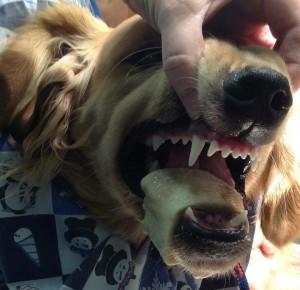 bone in dog mouth