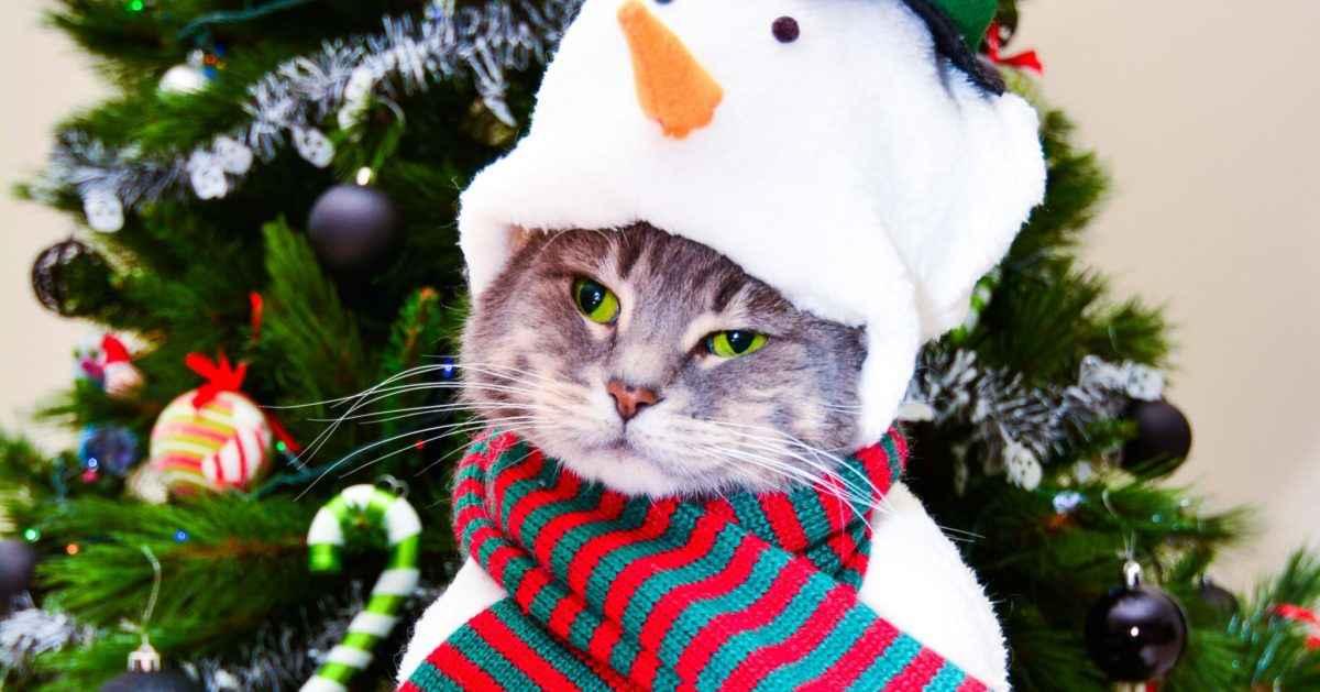 snowman christmas cat
