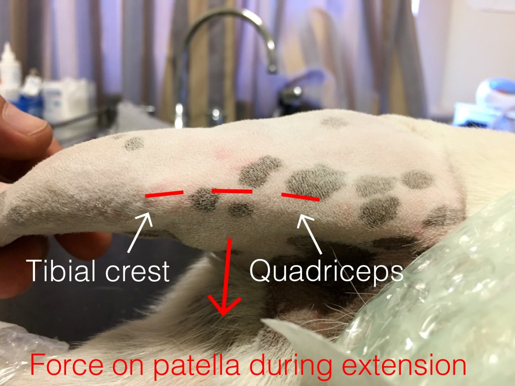 Patellar luxation diagram