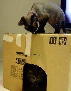cat box play