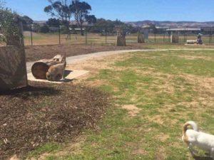 aldinga dog park