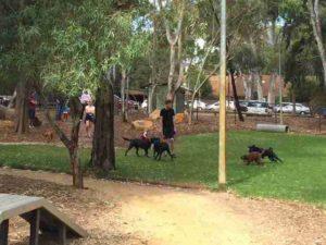 campbelltown dog park