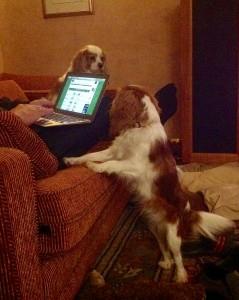 puppy on sofa