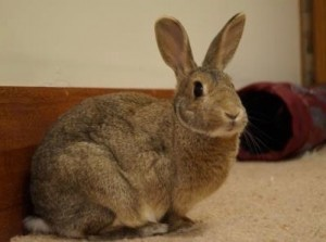pet wild rabbit