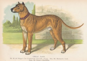 Original Great Dane