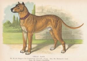 Original Great Dane