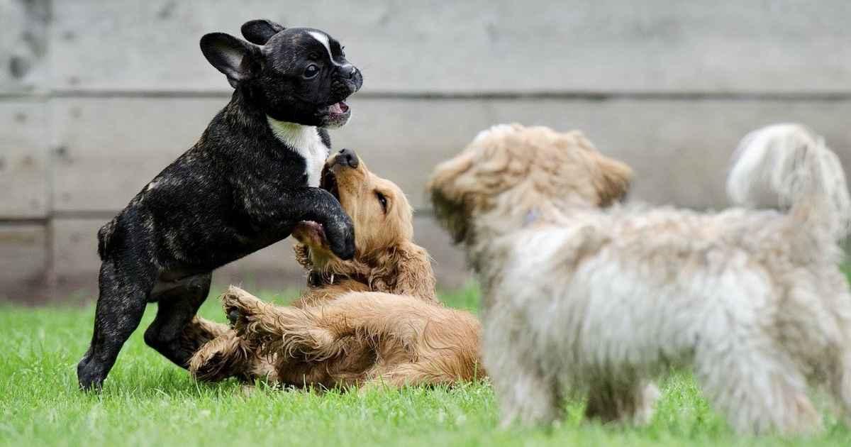 puppy park play