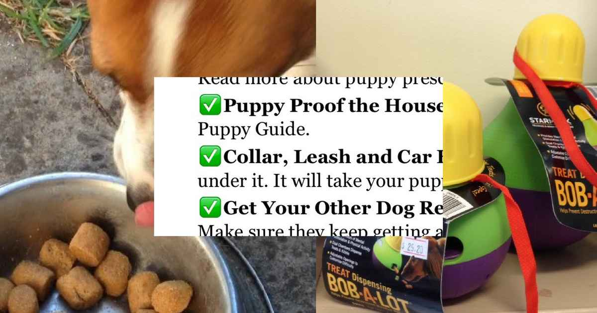 things puppy needs