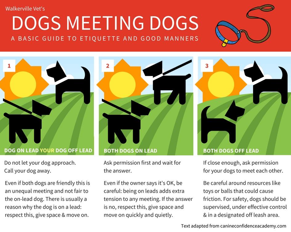 leash walking rules