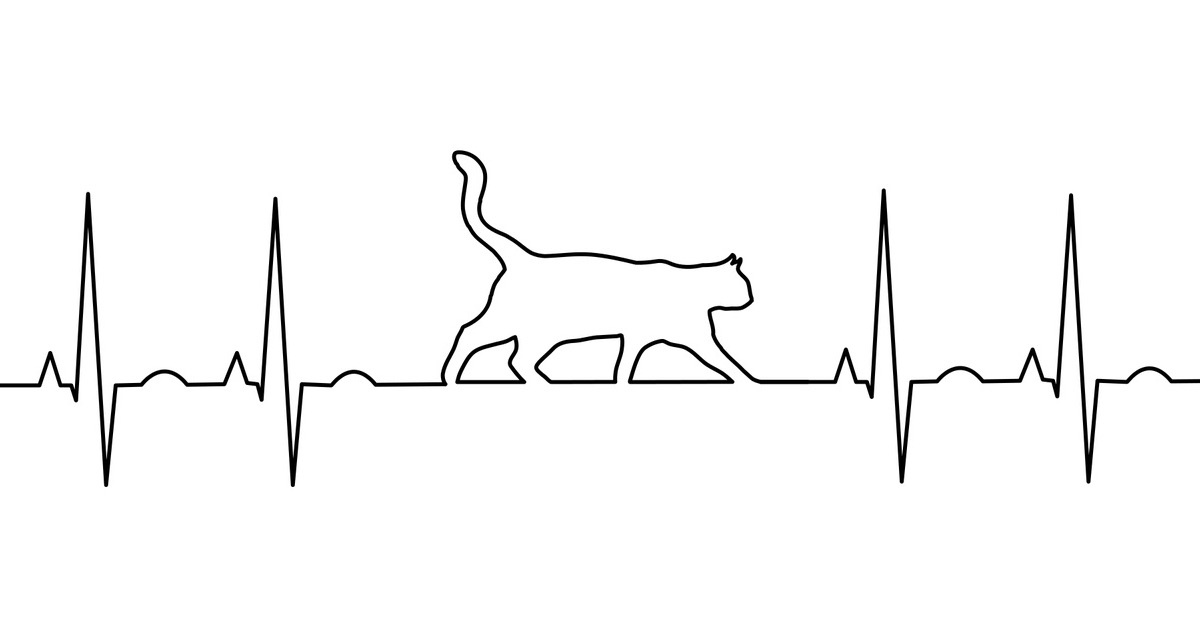 cat cardiac trace