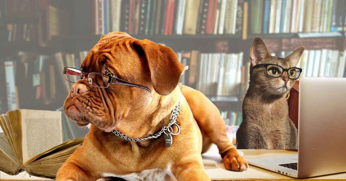 dog cat specialists