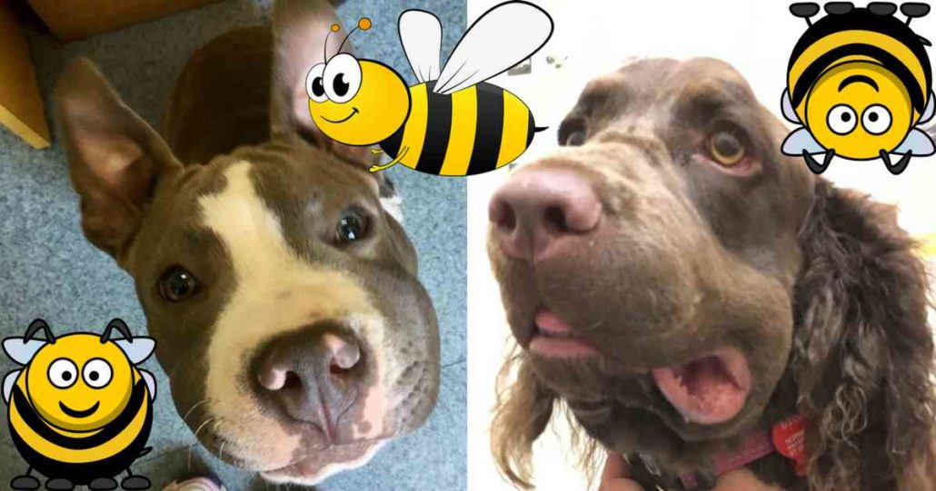 dogs and bees