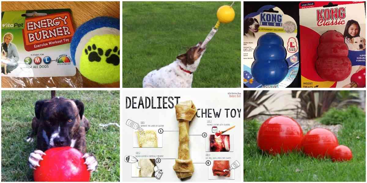 dog toy review