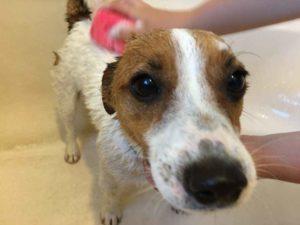wet dog shampoo