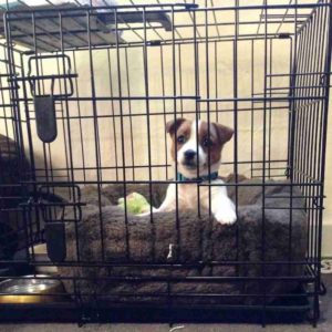 crate training puppy