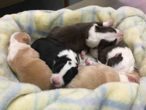 litter newborn puppies