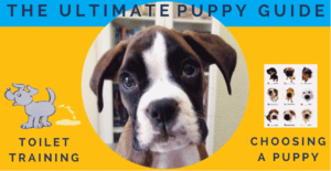 getting puppy guide