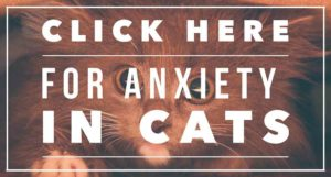 cat anxiety treatment
