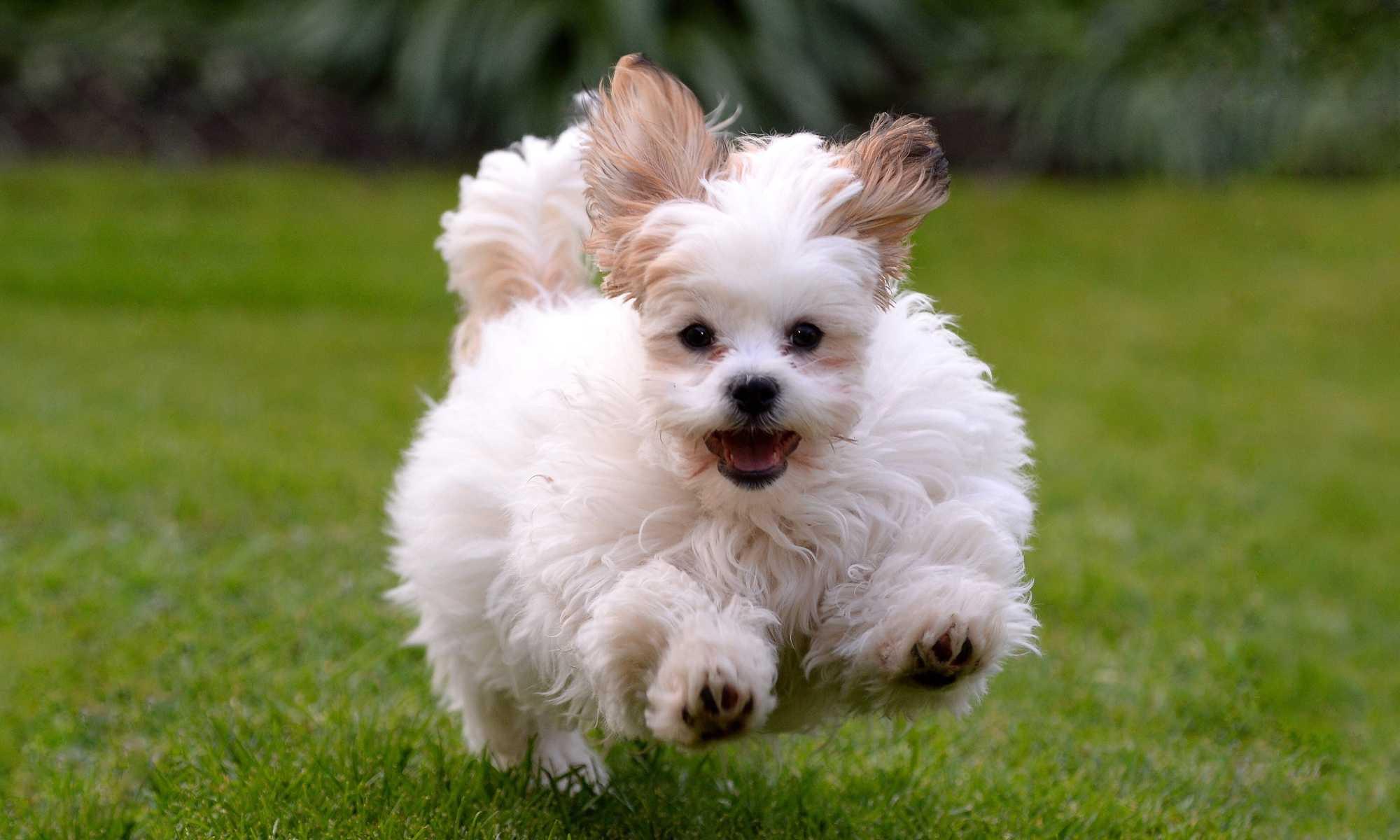 puppy class walkerville