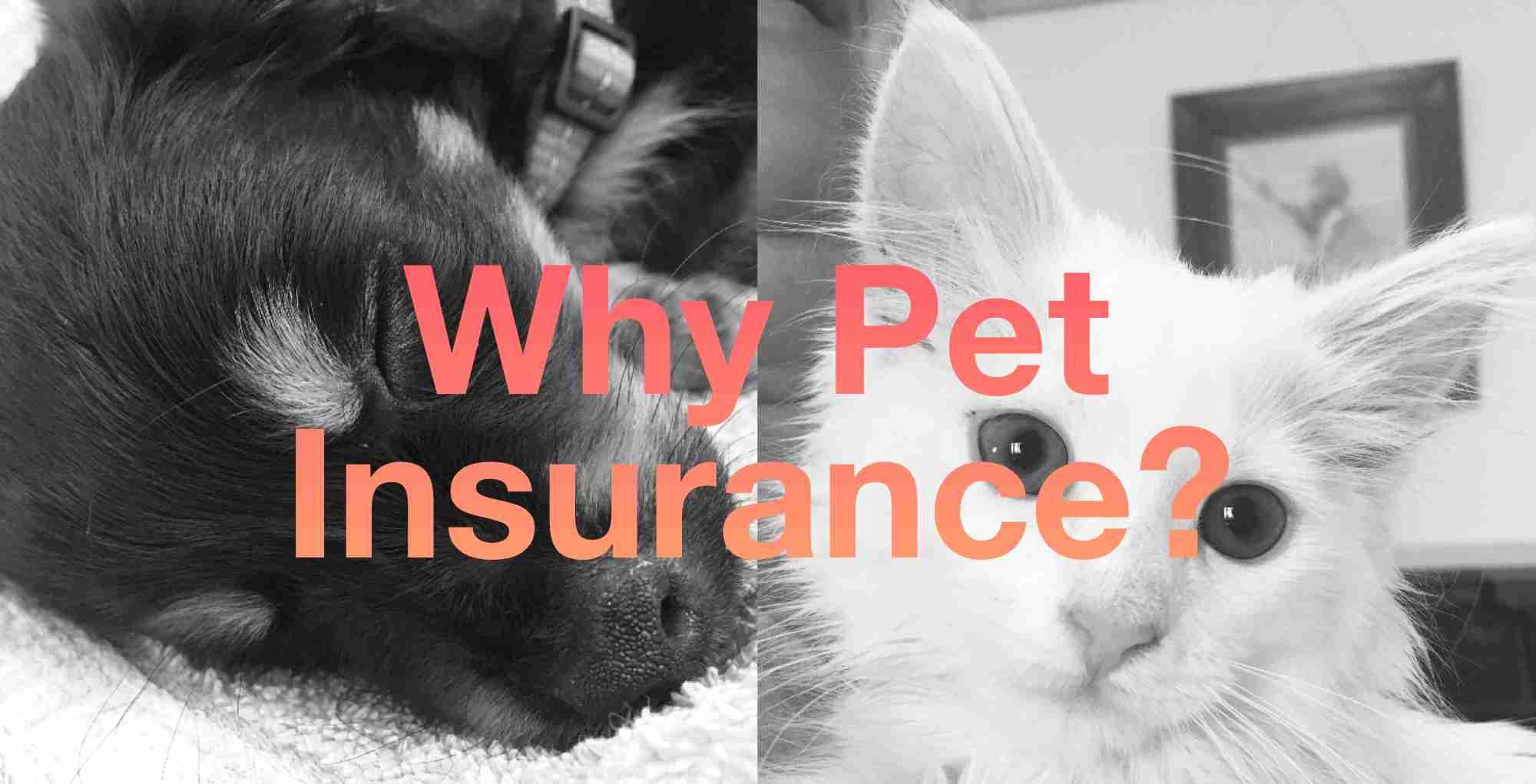 Dog cat insurance