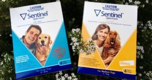 sentinel heartworm flea dog