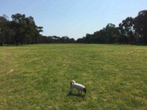 Bonython Park off leash