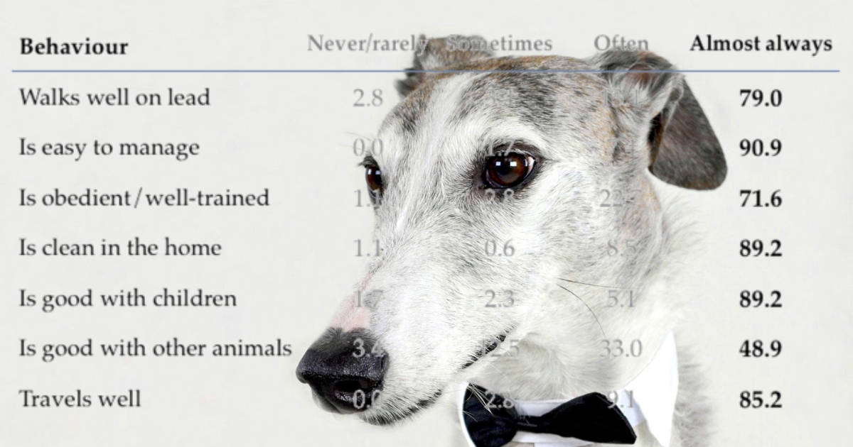 greyhound rescue figures
