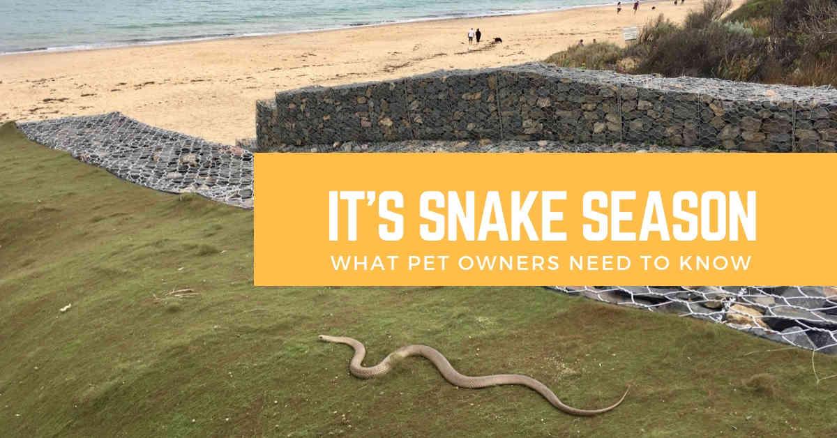 dog snake danger