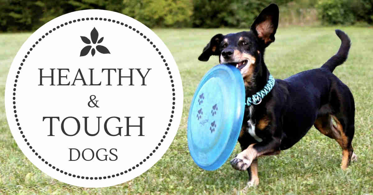 healthy dog breed
