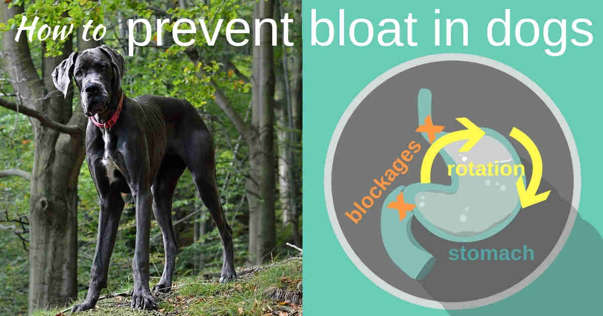 prevent dog bloat