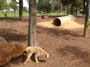 prospect dog park