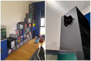 bookshelf cat tower